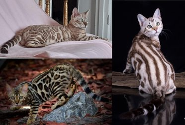 Katter-1