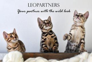 Leopartners-kort-1