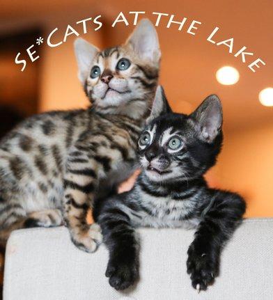 Se-Cats-at-the-lake-1