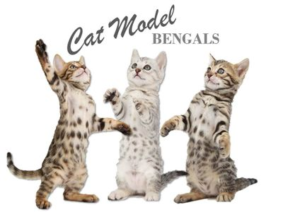 catmodel