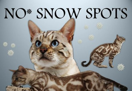 snowspot